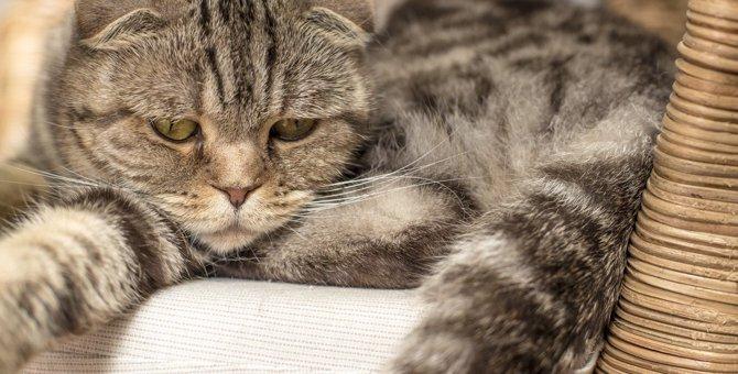 猫への不勉強が招く飼い主の『トラブル行為』5選