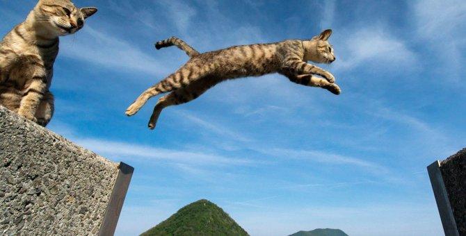 猫ってチャレンジャー!無謀な事でも挑む2つの心理とは?
