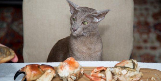 猫がカニを食べると?食べるのは△でも、被るのはOK!?