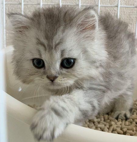 病気?猫のおしっこが臭い理由と対策