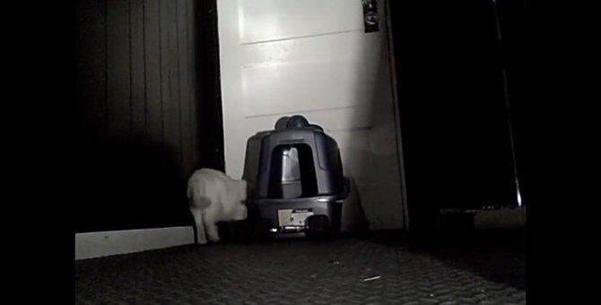 暗視カメラでとらえた猫の大脱走の瞬間!