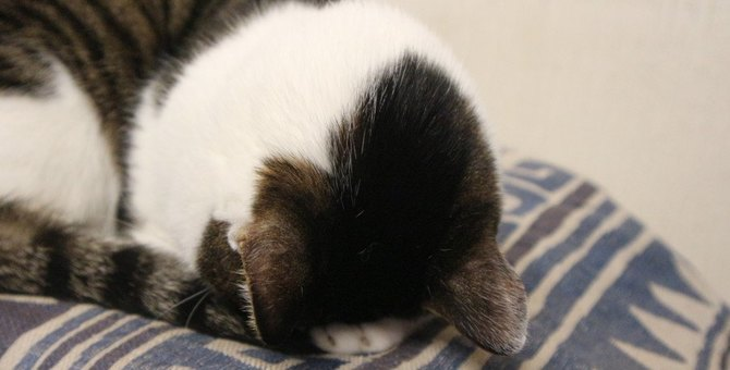可愛いけど注意も必要!猫が『ごめん寝』する3つの理由