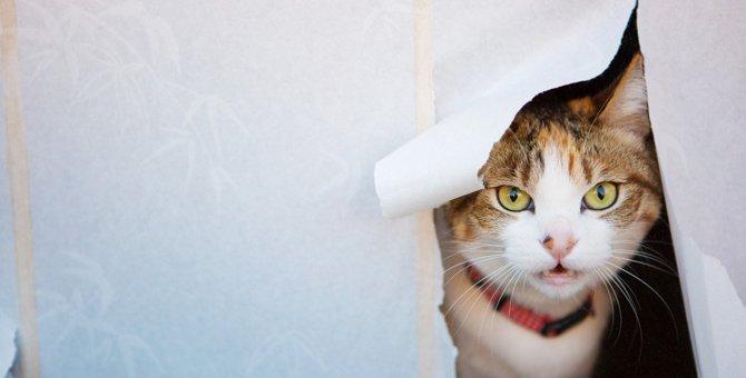 猫が『障子』を破ってしまう3つの理由と予防策