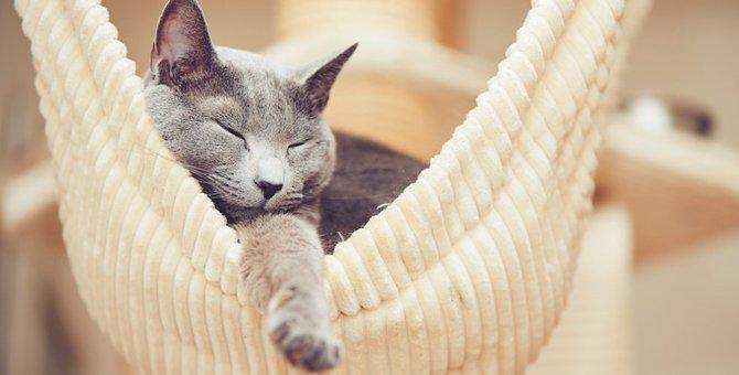 猫の平均睡眠時間はどのくらい?年齢との関係は?