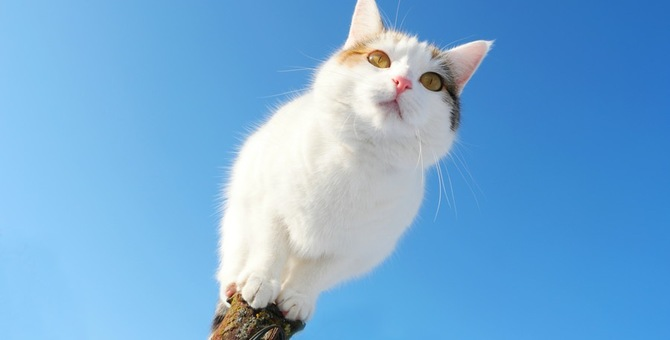 愛猫が旅立って毎日が辛い…立ち直るにはどうしたらいい?
