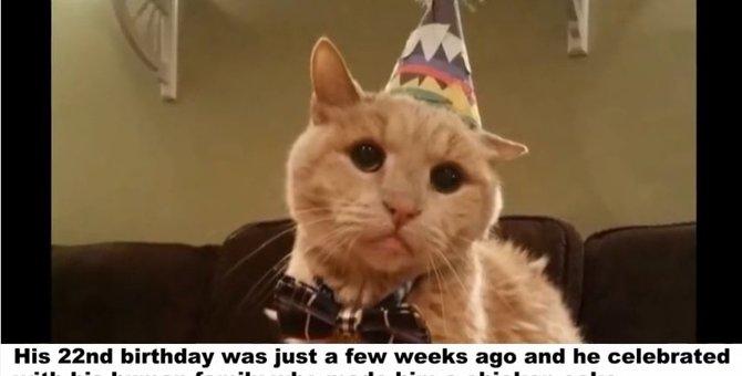 動物病院の前に捨てられていた『21歳の高齢の猫』のどんでん返し