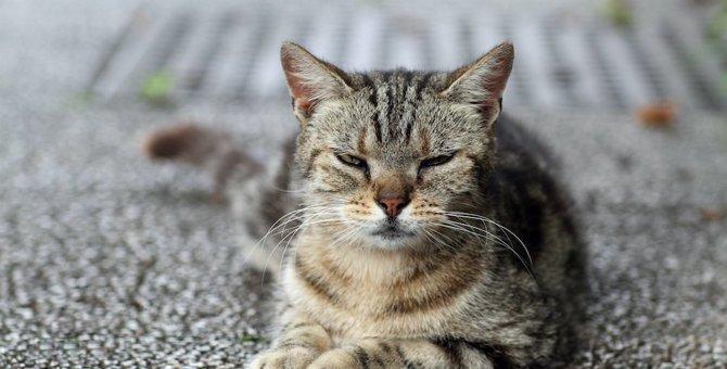 猫を不快にさせる飼い主の行動5つ!嫌がっているサインを見逃さないで!
