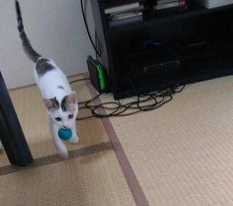 咥えて転がして大人気♡『羊毛フェルト』で猫が遊べるフェルトボールを手作り