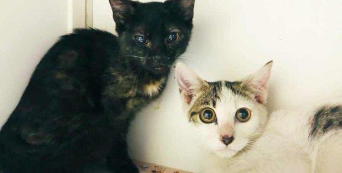 多頭飼育崩壊で苦渋の決断…永遠の家族を得た子猫たち