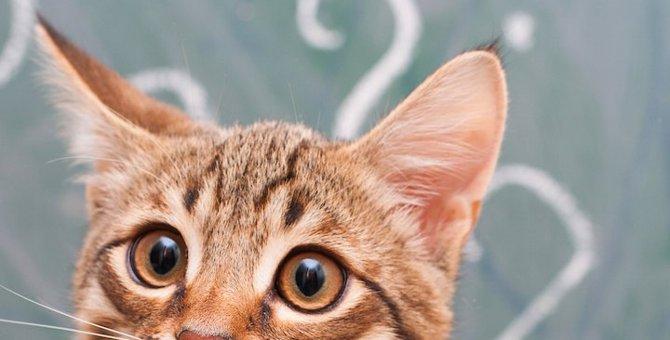 猫が食糞!?自分のウンチを食べてしまう時に考えられる5つの理由