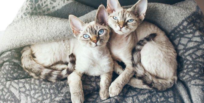 クローン猫はオリジナルとそっくりになるのか。実際の事例から検証する