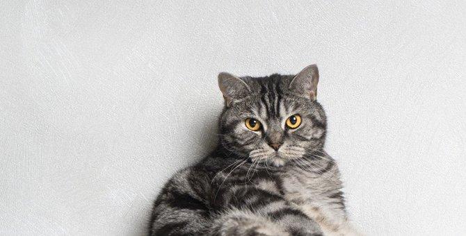 猫との『絆』が崩壊する絶対NG行動5つ!信頼回復のためにすべきケアとは?