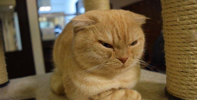 飼い主に激おこ!猫が怒る6つのシチュエーション