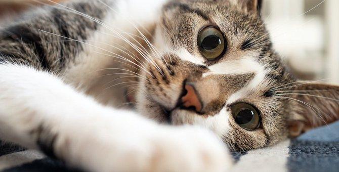 猫の平均寿命はどのくらい?なぜ人より短いの?