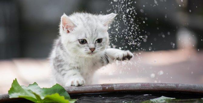 猫の水遊びを止めさせる2つの対策
