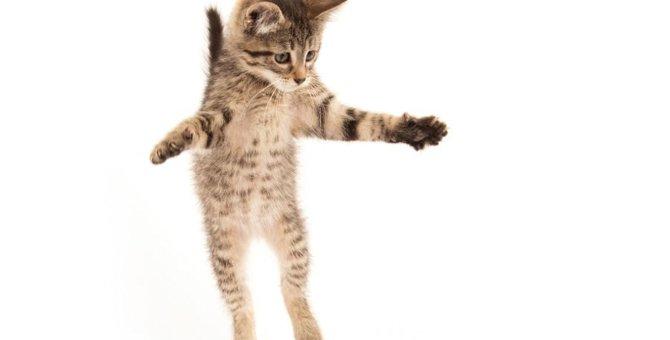 猫が急に『飛び跳ねる』ときの心理5つ