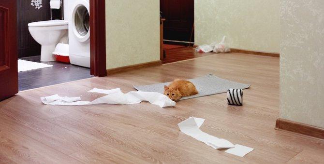 イタズラする猫をしつけるには?イタズラ防止の対策グッズも紹介