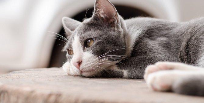 猫に『愛情が無い』と思わせてしまう飼い主の無意識行動4選