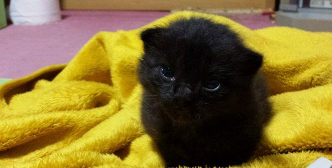 母猫のお引越しでおいてけぼりに・・・黒猫ゴンスケとの出会い