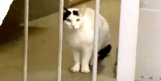 引っ越しで置き去りにされた猫…住民の善意で新たな人生へ No.1