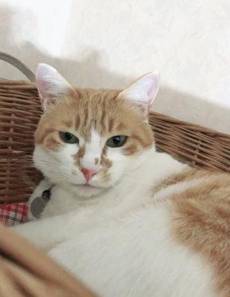 猫の気持ちが乗らない時の心理5つ