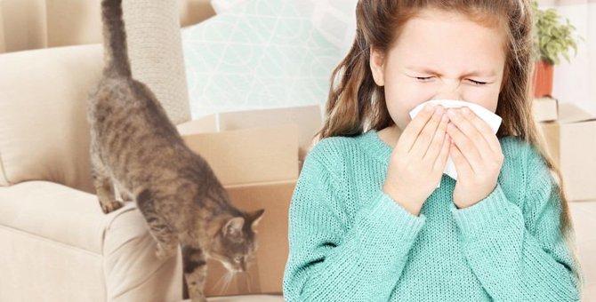 猫好きなのにまさか?!猫アレルギーと診断されたら絶対やってはいけないこと3つ