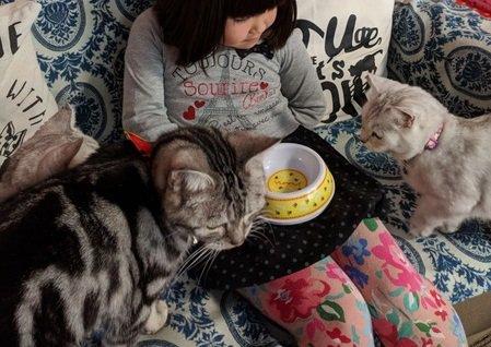 「アミューズパーク郡山」にある猫カフェで、自由気ままな純血種とまったり