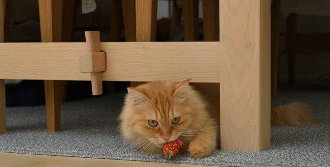 猫が甘えるときに見せる意外な行動3選