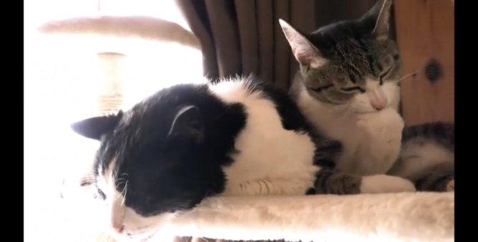 お年寄り猫ちゃんを労わる若猫ちゃん!慈しみの心に胸を打たれる♡