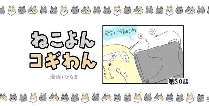 ねこよんコギわん【第30話】「やっぱりコレが好き」
