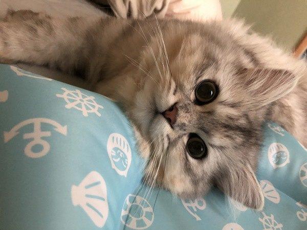 甘えん坊な猫に育てる方法5つ