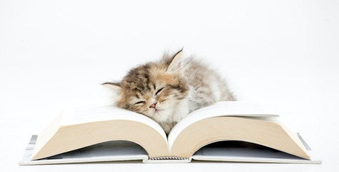 猫はどんな事を覚えてるの?4つの事と学習能力について