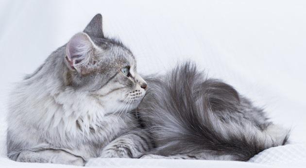 猫がテーマの美術館のオススメ4選!