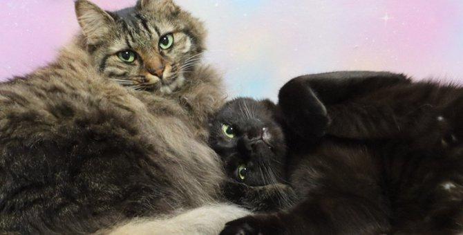 猫をめぐる『トリビア』4選!人間との違いや独特な習性などおもしろ雑学を紹介!