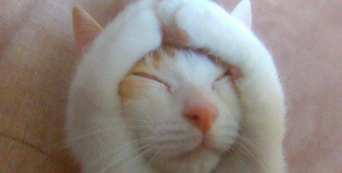『警戒心のない猫』だけがする仕草や体勢4つ
