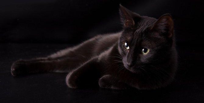 黒猫が横切ると不吉と言われる理由について