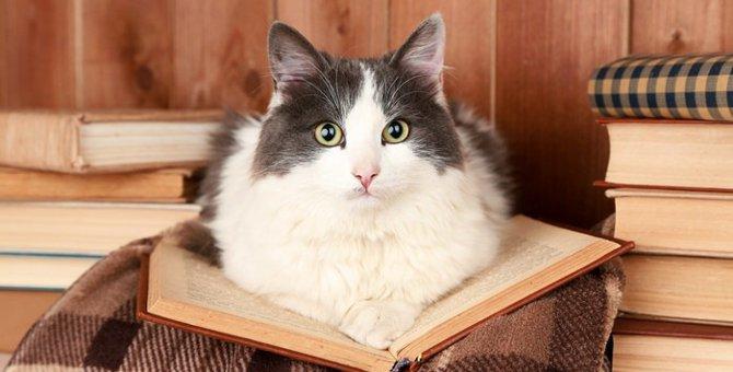 猫を賃貸で飼うための工夫や注意点