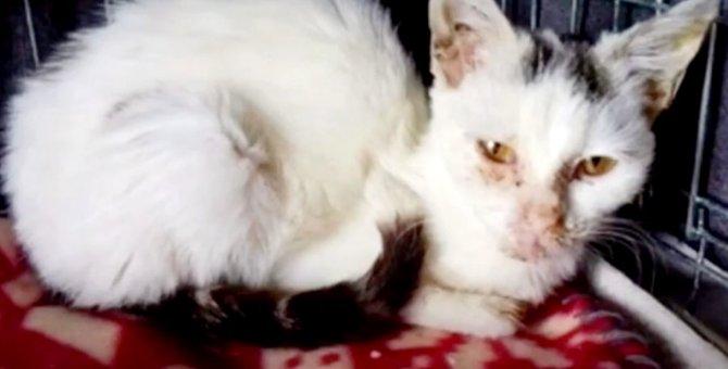 九死に一生を得た猫…おしゃべり上手の美猫になり幸せに!