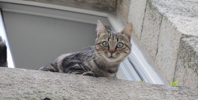 猫用の網戸の特徴3つと選び方、おすすめ商品