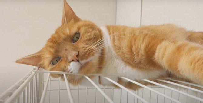 たまらない!猫ちゃんのモチモチはみ肉♡