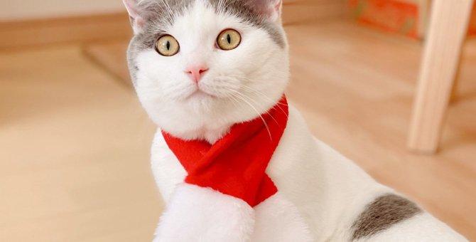 Laylaの12猫占い 12/9~12/15までのあなたと猫ちゃんの運勢