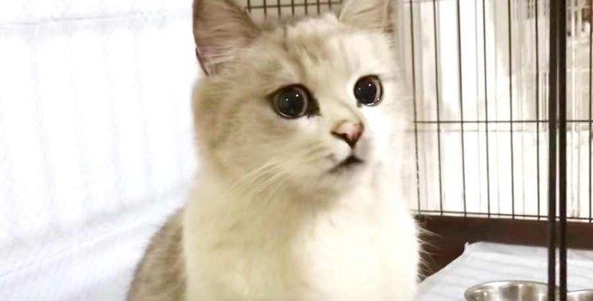 捨てられた飼い猫が出産…尊い子猫の姿に感動!