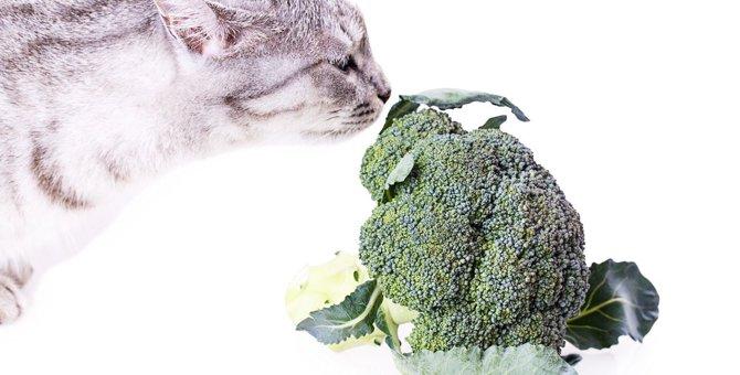 猫に『ブロッコリー』は与えてもOK?メリットと注意点を解説