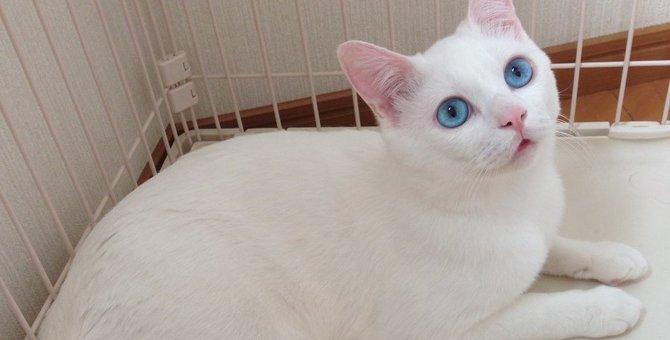 美猫セツちゃんを有名にした残念すぎる寝顔とは!