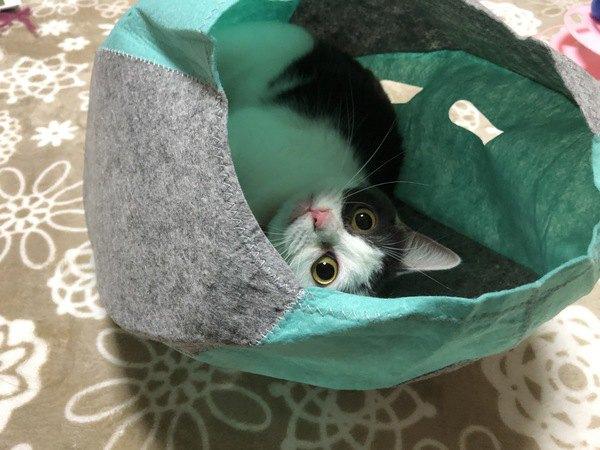 猫が「ひきこもる」ときの5つの理由