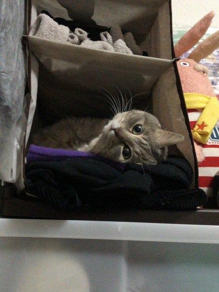 家の中で猫が隠れられる場所4つ