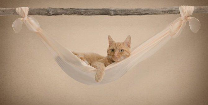 猫のハンモックを手作りする4つの方法と注意点