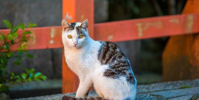お松大権現は猫だらけの神社!その由来と化け猫騒動とは