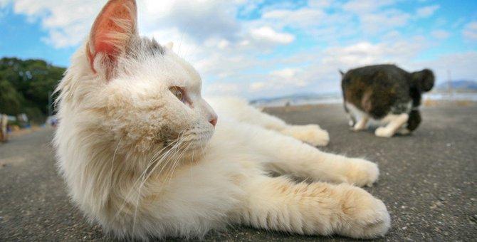 「ノネコ」と「野良猫」って違うの?!猫の名称10個の解説!