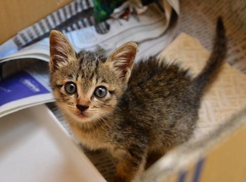 排水溝に落ちて出られなくなった猫「ココ」奇跡の救出劇